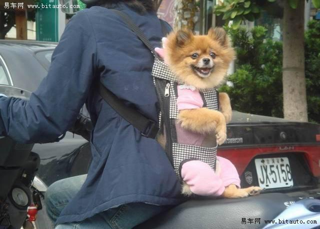 【搞笑的狗狗背包图片】-易车网b