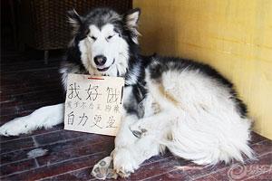 丽江古城中的狗狗们