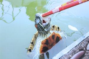 一只住别墅吃鲜肉的龟龟