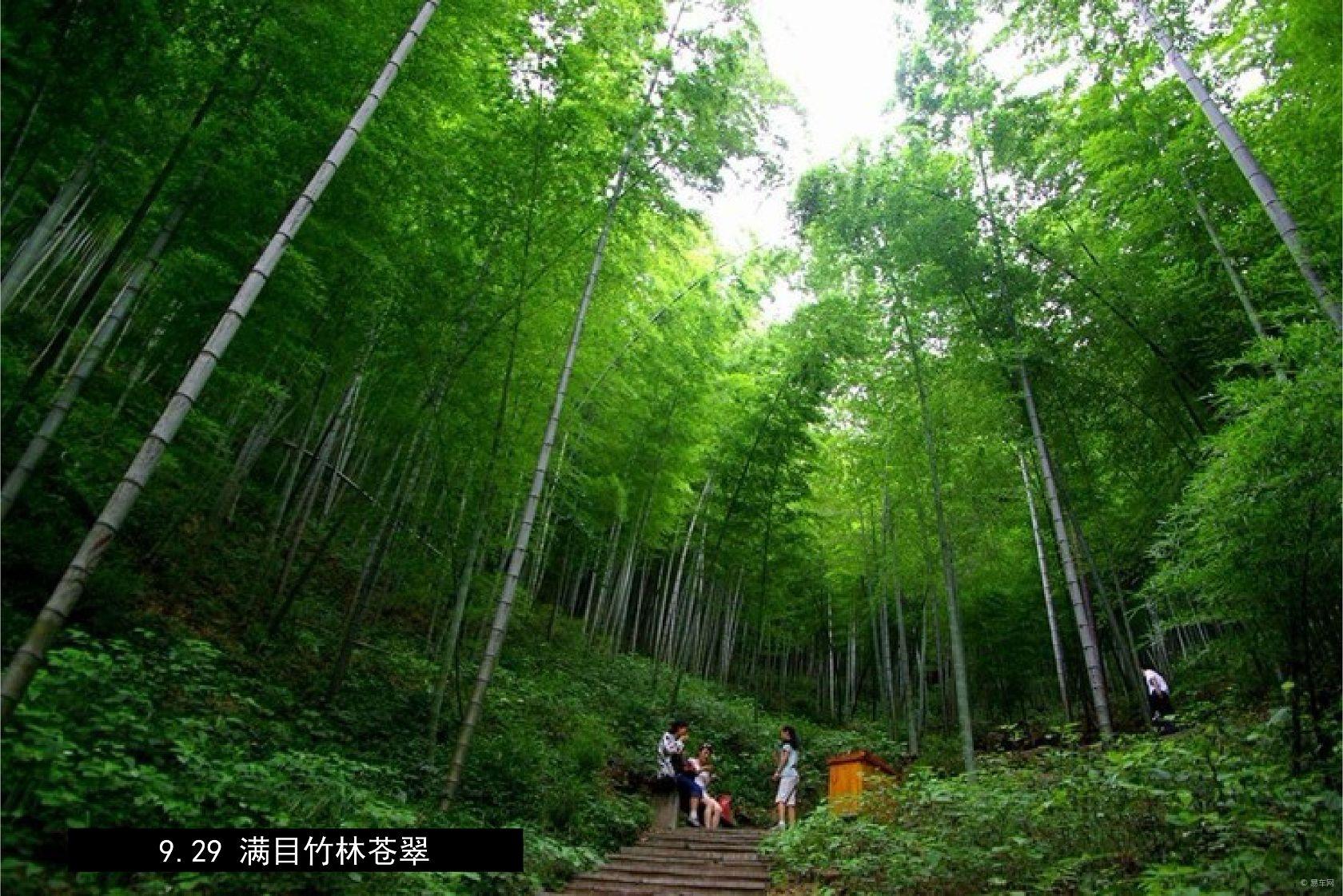 踏入景区,第一感觉是南山竹海无愧竹海之称,满眼都是绿色的海洋,而与