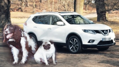 全新日产奇骏4DOGS 专为狗狗设计的汽车