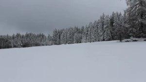 大众T4俄罗斯森林里雪地探索