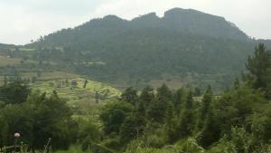 缘生态的风景