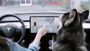 特斯拉Dog Mode演示视频