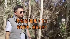 罗布泊-若羌(下)若羌灰枣