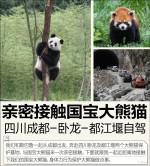 亲密接触国宝大熊猫 四川卧龙/都江堰自驾